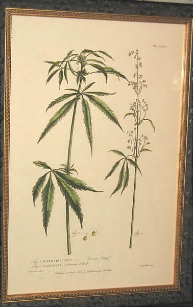 Accessories<br>Accessories Archives<br>SOLD   Botanical Print of Cannabis